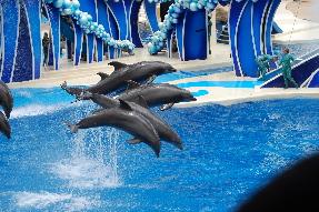 SeaWorld - Blue Horizons