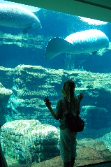 SeaWorld - Manatees
