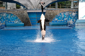 SeaWorld - Believe!